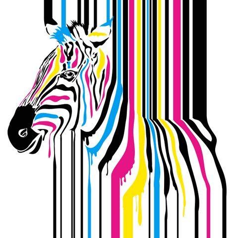 Medium Backdrop - Zebra With Coloured Spots