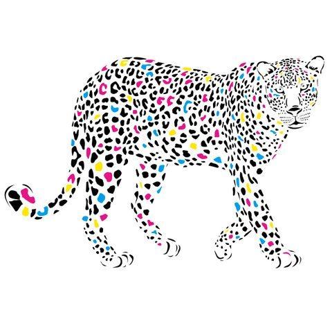 Medium Backdrop - Cheetah With Coloured Spots