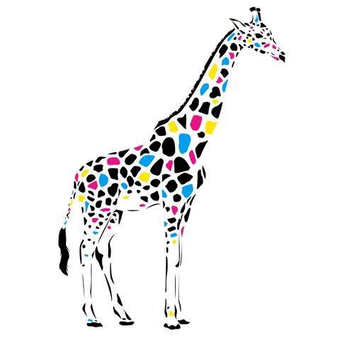 Medium Backdrop - Giraffe With Coloured Spots