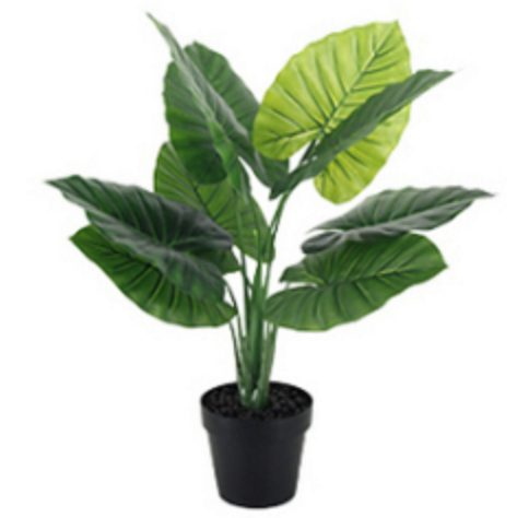 Plant hire