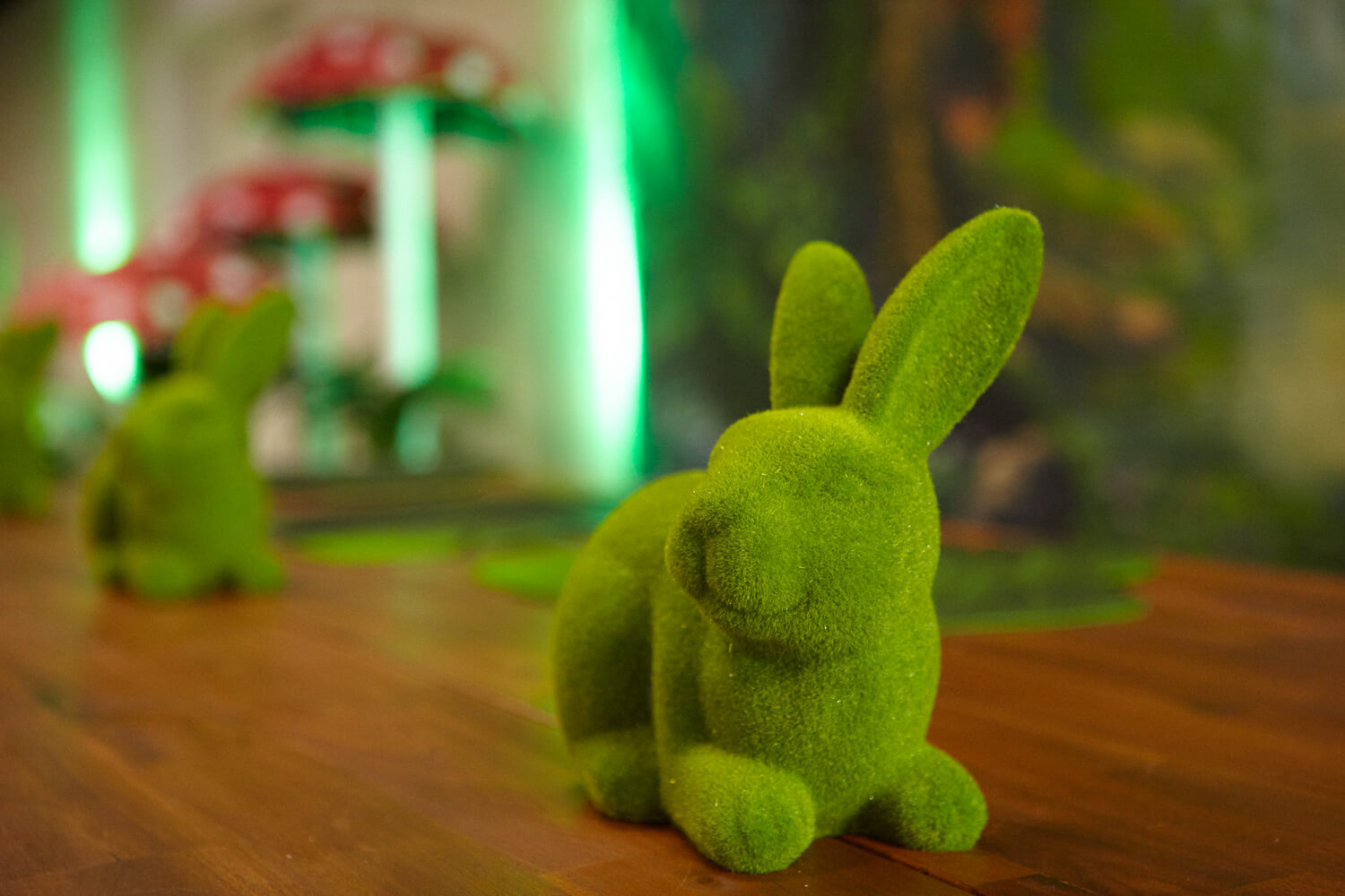 Moss Rabbit Hire Melbourne In Enchanted Theme