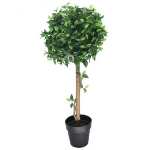 Ficus Tree Pot Hire Melbourne