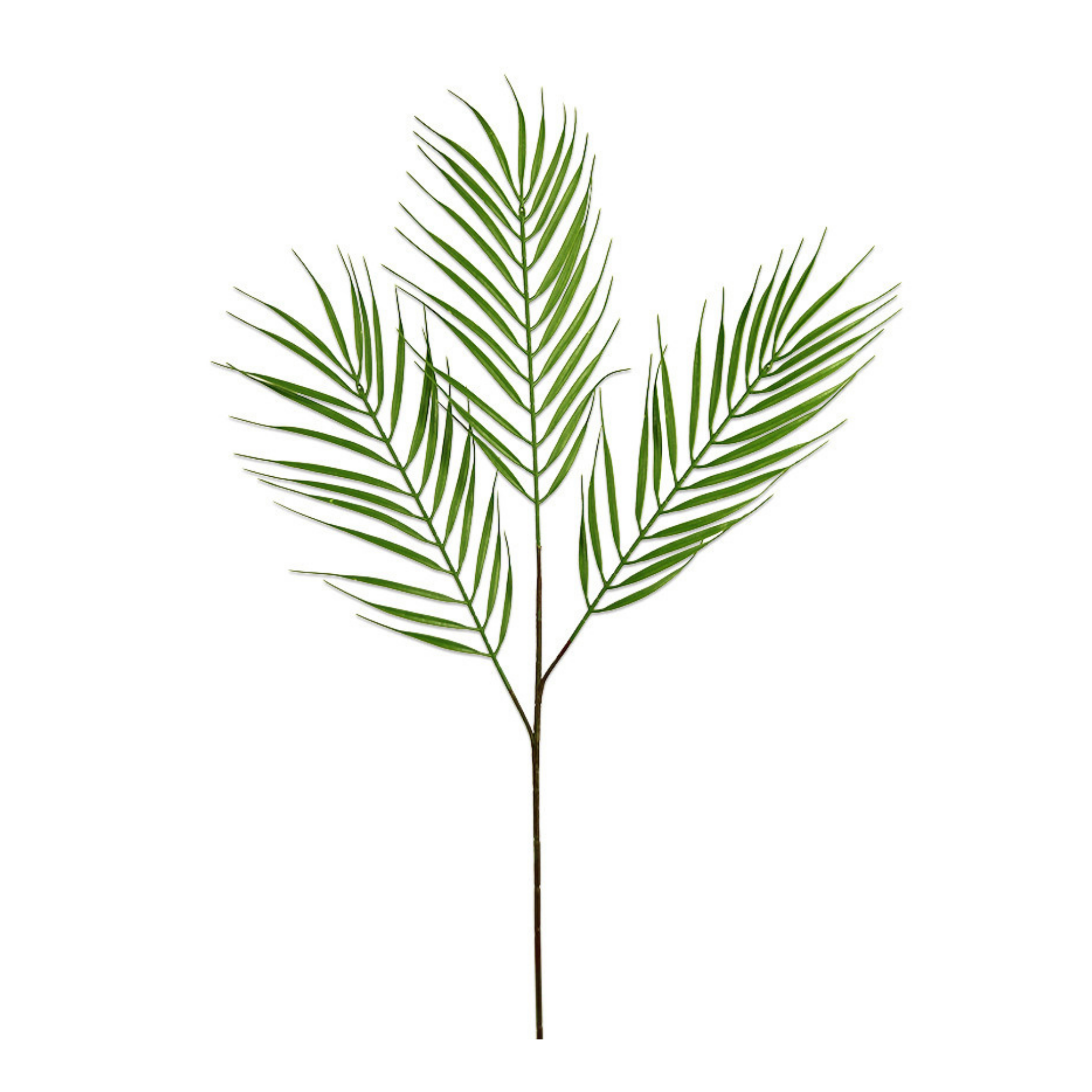 Leaf-Palm-Grass-Hire