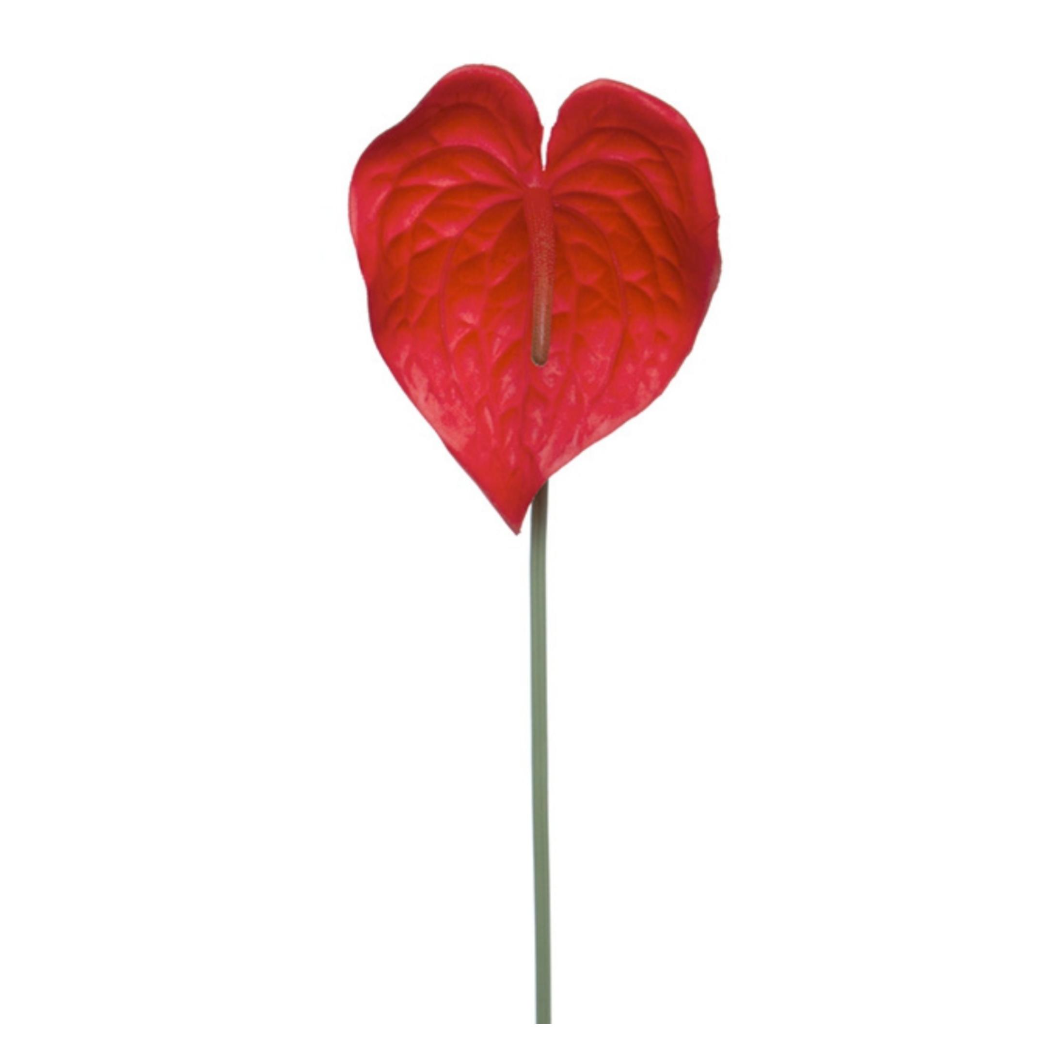 Flower-Stem-Anthurium-Hire