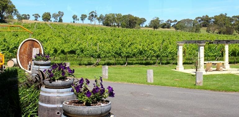 Fergusson winery vineyard